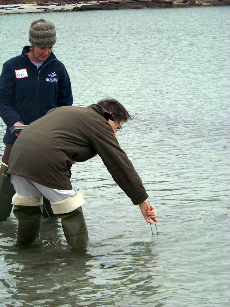Learn water-quality sampling techniques at the Maine Healthy Beaches training on Thursday, May 25.