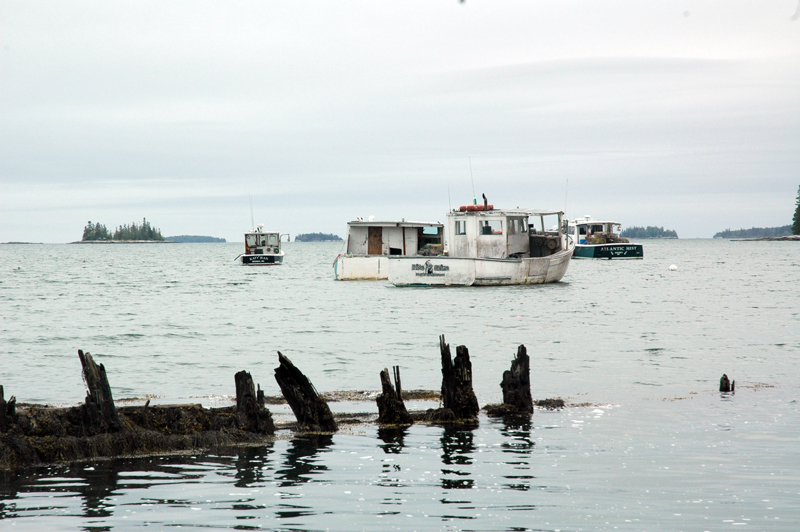 Lobster boats at anchor near the Bremen Lobster Pound Co-Op. (Alexander Violo photo)