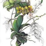 Bean Exhibits at Savory Maine