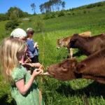 Montessori Elementary Students visit Morris Farm