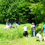 Walk 'N Wag on Waldoboro Day