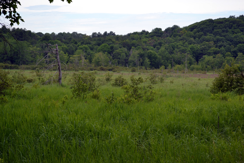 Acres of marshland visible from the River-Link Trail on Barrows Louderback Preserve. (Abigail Adams photo)