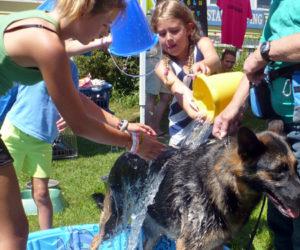 Mutt Scrub in Boothbay Harbor