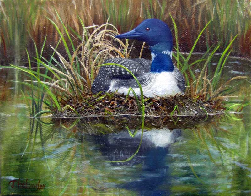 "Liliana Thelander's ""Loon on Nest"" is currently on display at Pemaquid Art Gallery."
