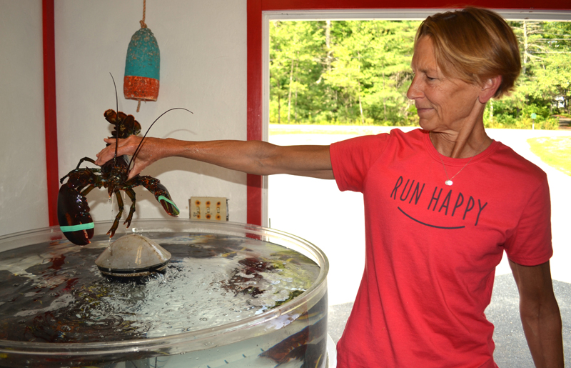 Barb Scully lifts a lobster out of a seawater tank at Scully's Oyster and Lobster Market in Edgecomb on Thursday, Aug. 17. (Abigail Adams photo)
