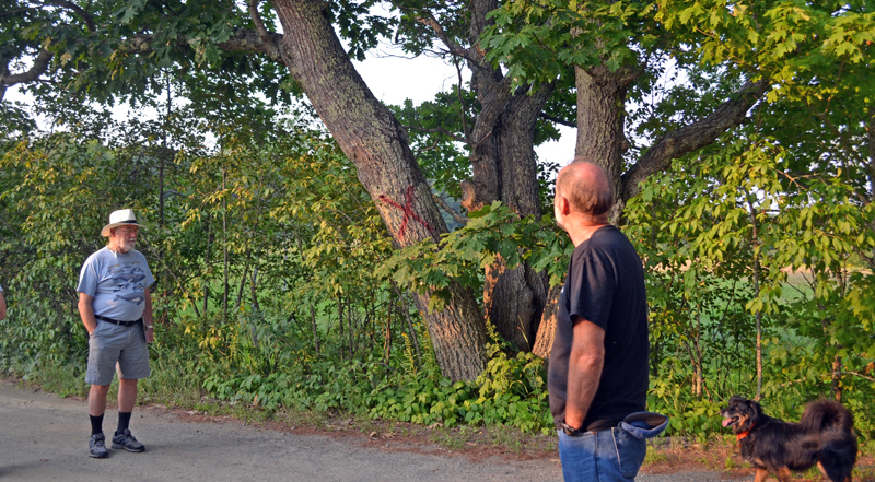Whitefield Selectman Frank Ober (left) and Hollywood Boulevard resident Philip Yund look at one of the trees marked for removal as part of the town's plan to widen the road. (Abigail Adams photo)