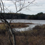 Final PWA Preserve Steward Hike is at Hatchtown Preserve