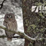 First National Bank Announces Winners of Calendar Photo Contest