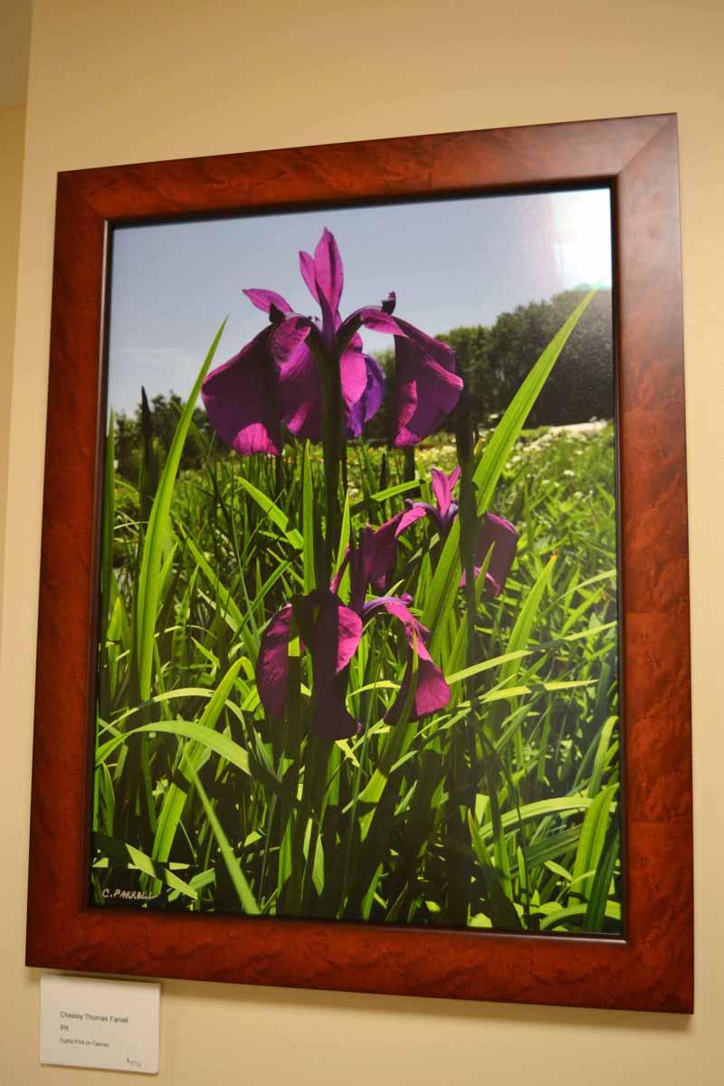 "Chesley Farrell's ""Iris"" (Christine LaPado-Breglia photo)"