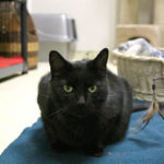 Animal Shelters to Host Black Cat Ball