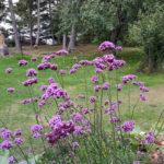 Old Bristol Garden Club Announces Grants