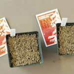 Native Plant Seed-Sowing Workshop on Oct. 28