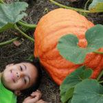 Halloween Harvest Party at Pumpkin Vine Family Farm
