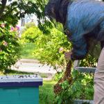 'Secret Lives of Beekeepers' Program at Botanical Gardens