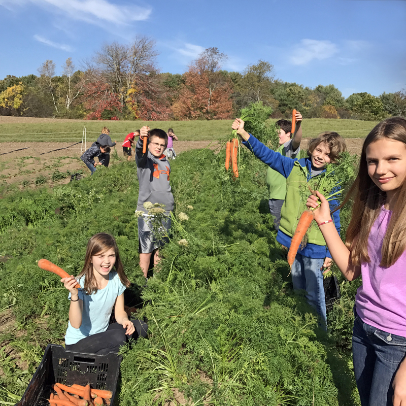 Student volunteers at Twin Villages Foodbank Farm harvest carrots that will be donated to Lincoln County food pantries.
