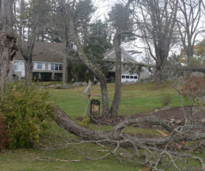 Windstorm Causes Widespread Damage, Leaves Majority of County Dark