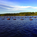 Learn About Oyster Harvesting at Lincoln Home