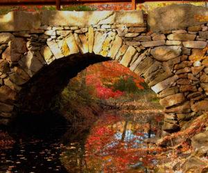 New Harbor Woman Wins November Photo Contest