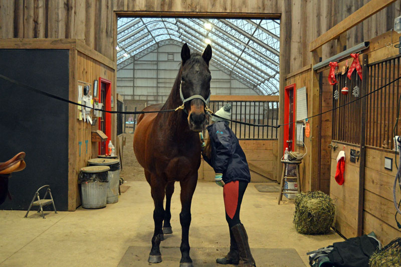 Bridget Smith, 16, brushes her horse, Roger, inside one of the barns at Stonewall Stables in Nobleboro. Roger is one of 16 horses boarded at the stables. (Matthew Mitterhoff photo)