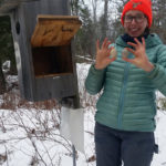 Midcoast Conservancy Offers Wood-Duck Box Monitor Training