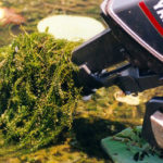 No Hydrilla in Damariscotta Lake for First Time Since 2009