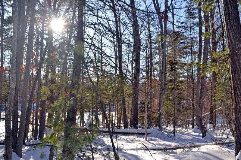 The view from the Great Salt Bay Preserve Heritage Trail. (Christine LaPado-Breglia photo)