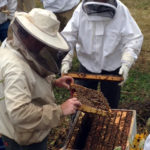 Beekeeping Classes to Begin in February
