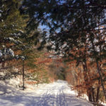Winter Fun at Midcoast Conservancy Preserves
