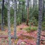 Woodland Stewardship Tour at Bearce Allen Preserve