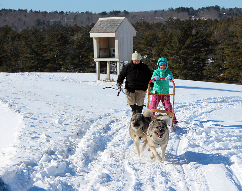 A dog-sledding demonstration is just part of the fun scheduled for Winter Fest on Sunday, Feb. 18 from noon-3 p.m.