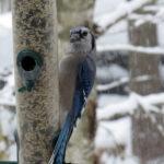 Mid-Coast Audubon Holds Bird Seed Sale