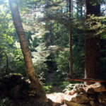 Woodland Walking Tour at Bearce-Allen Preserve