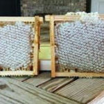 Workshop on Making Comb Honey