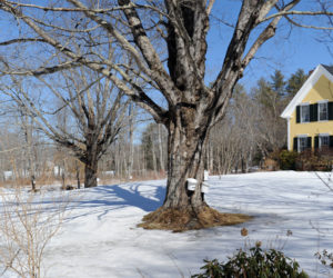 Maine Maple Sunday is March 25