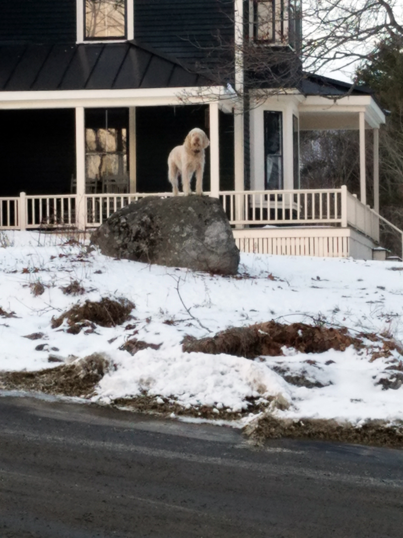 Pippo guards the road into Round Pond village.