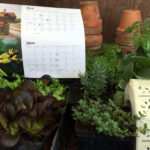 Seedling Saturday Sales to Start Up in Late April