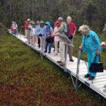 Guided Bog Walk at Nature Center