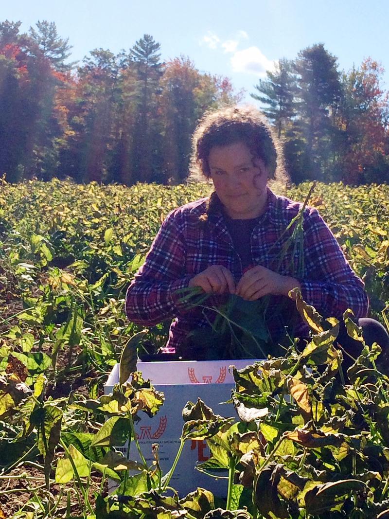 Chayli Buenger gleans green beans.
