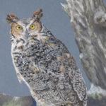 Damariscotta Artist Wins Wildlife Art Awards