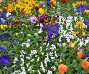 Garden Plants 101 — Advice from an Expert Nurseryman