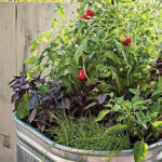 Container Gardening — A Neat Little Way to Grow Your Own Food