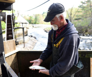 Annual Alewife Harvest Underway in Damariscotta Mills
