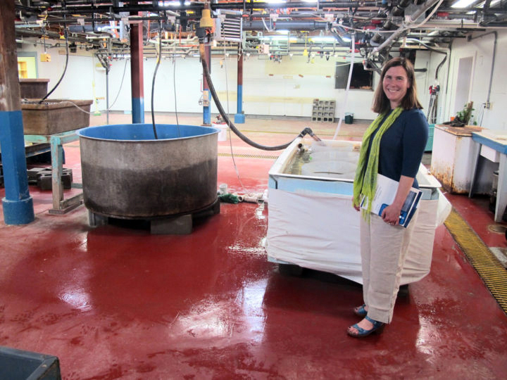 Dr. Heather Leslie, director of the University of Maine's Darling Marine Center, stands in the center's flowing seawater lab on Wednesday, May 23. (Bill Trotter photo/Bangor Daily News)