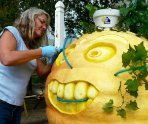 Free Giant Pumpkin Plants on Seedling Sunday