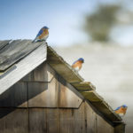 'Puffin Man' to Lead Bird Walk at Chapman Farm