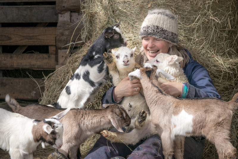 Mary Myrick, of Cape Cod, Mass., won the April #LCNme365 photo contest with her shot of Patti Hamilton, of Hamilton Farm in Whitefield, being swarmed by baby goats. Myrick will receive a $50 gift certificate to Newcastle Chrysler Dodge Jeep Ram Viper, of Newcastle, the sponsor of the April contest.