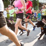Save a Stray 5K in August