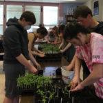 Students Transplant Heirloom Tomato Seedlings for Plant Sale