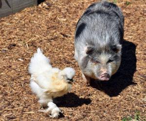 Jefferson Farm a Haven for Rescue Animals