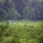 Plane Crashes into Jefferson Swamp, Occupants Escape Injury